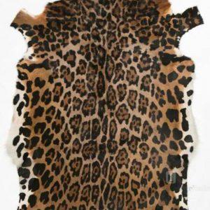 Blesbok - Jaguar